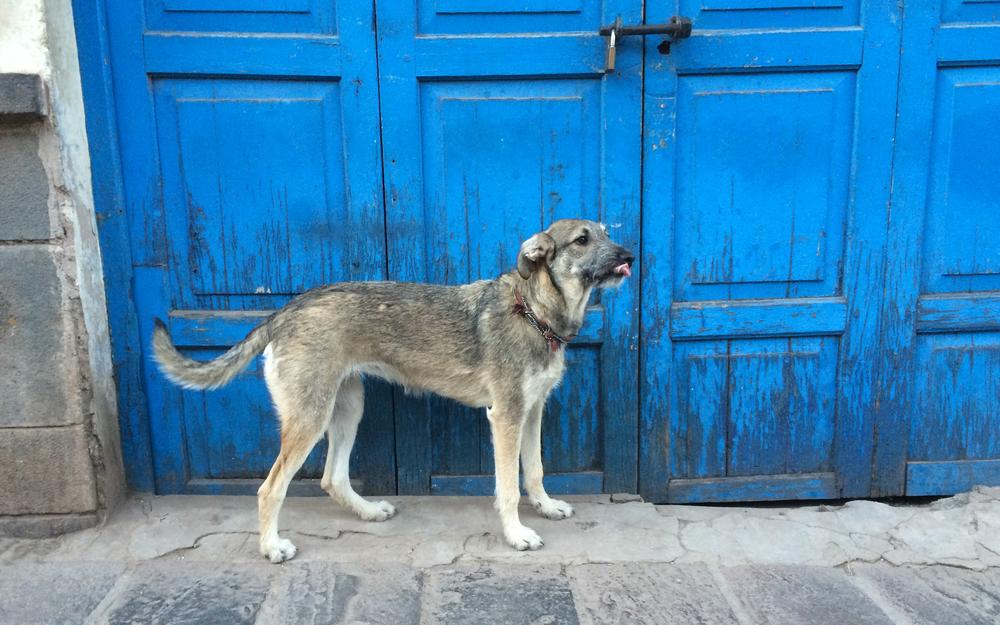 Christian-Schaffer-Peru-Cusco-Dog-Street.jpg