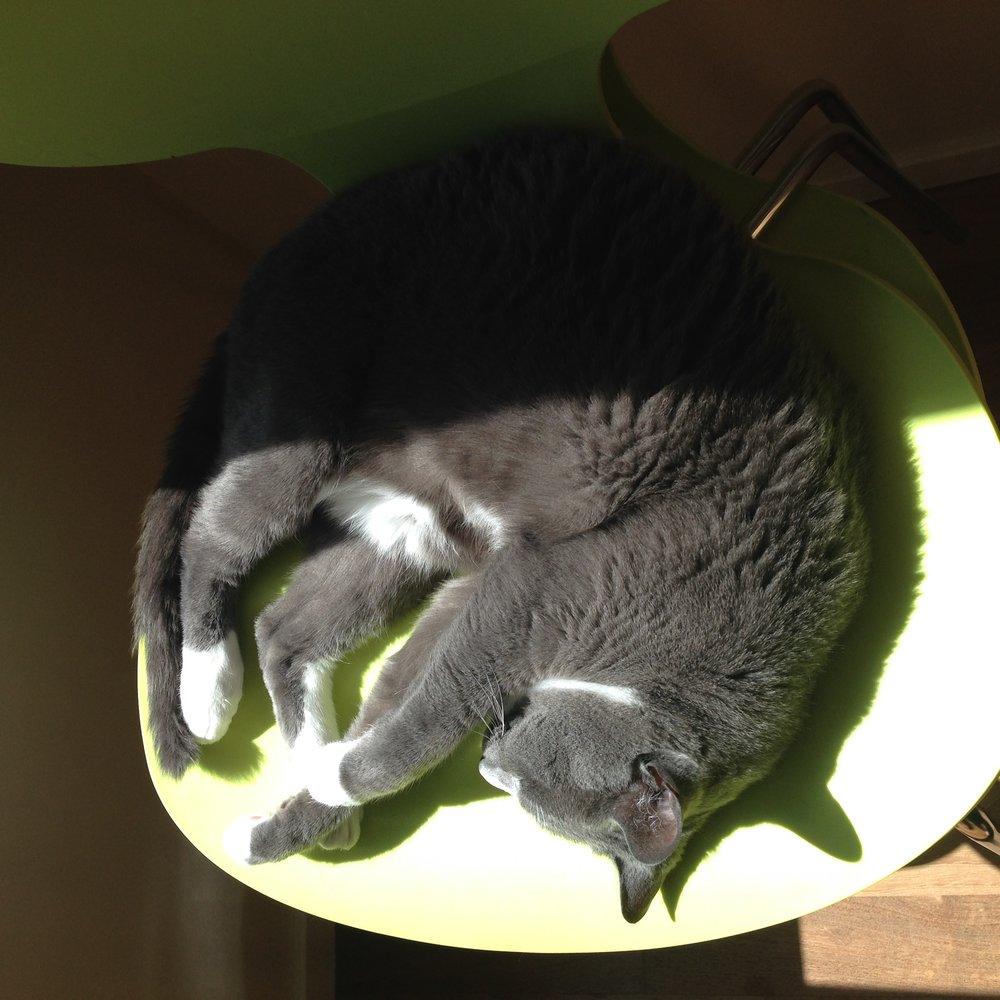 """Reggie Sunbathing"""