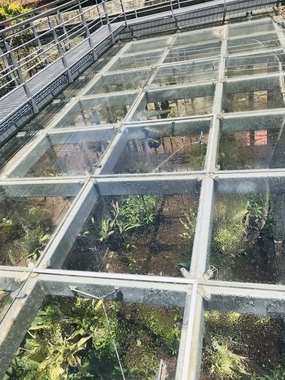 Here's a lovely glass building - it is an award-winning greenhouse in the Botanical Garden in Oaxaca.