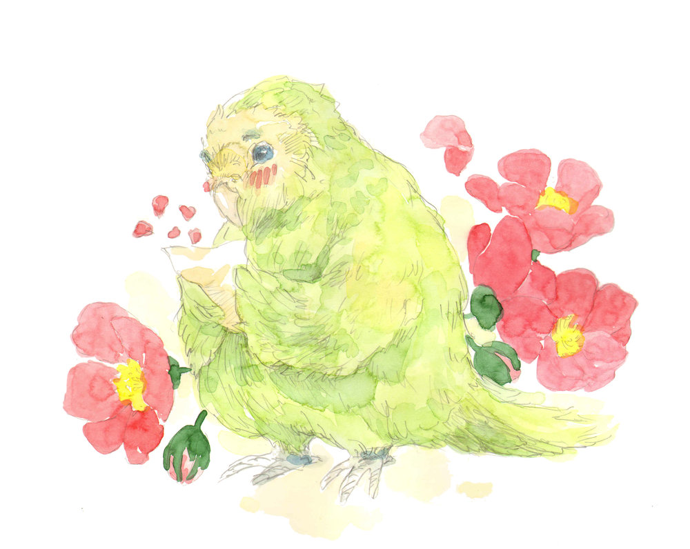 Kakapo Parrot in Love