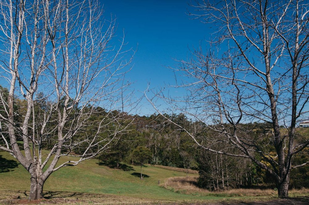 Montville, Sunshine Coast Hinterland Pre Destination Wedding Photographer Blog - Brisbane, Australian