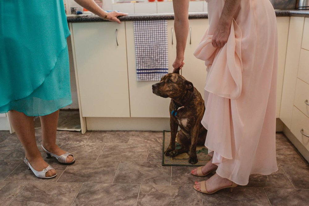 Obi Obi, Nambour Destination Wedding & Pet Dog Photographers - Brisbane, Sunshine Coast, Australian