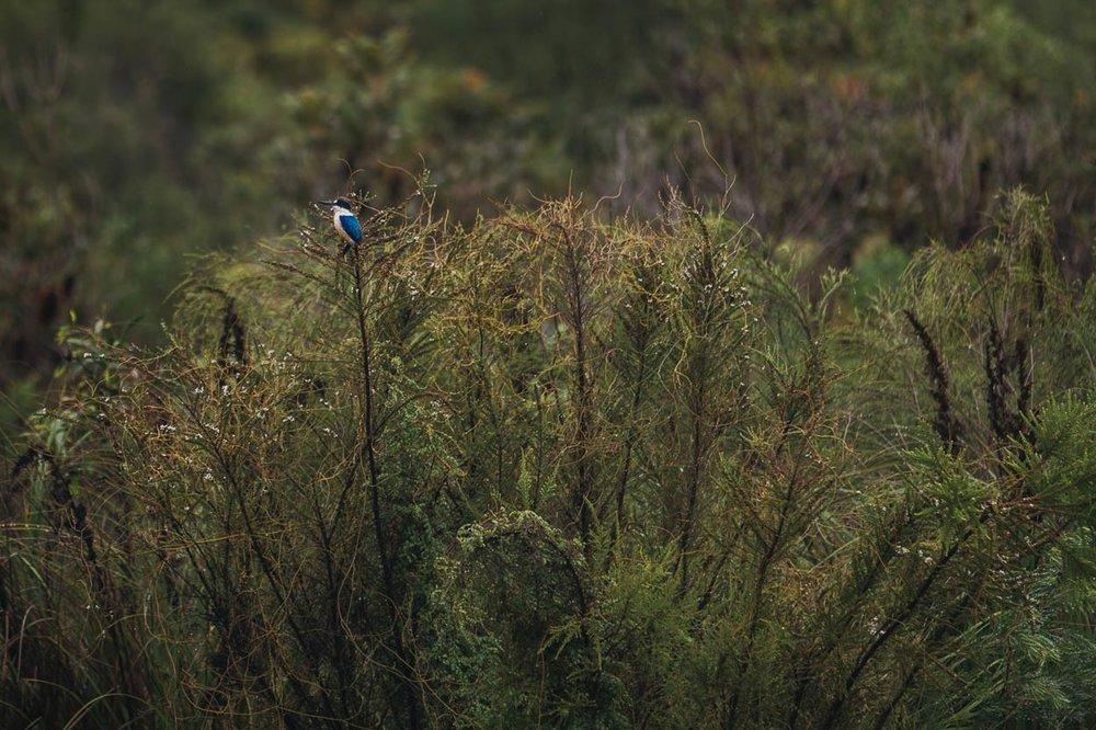 Kingfisher Bay Resort, Fraser Island Bird Destination Photographer - Brisbane, Sunshine Coast, Australian