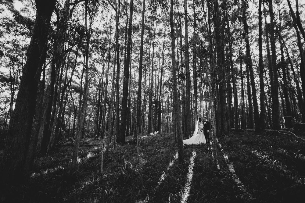 Maleny & Montville Destination Wedding Elopement Photographer - Sunshine Coast, Brisbane, Australian Blog