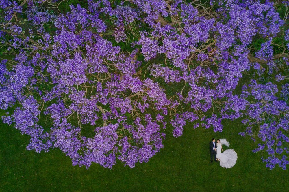 Gabbinbar Homestead & Noosa Drone Wedding Photographer, Sunshine Coast - Queensland, Australian Destination Jacaranda Tree