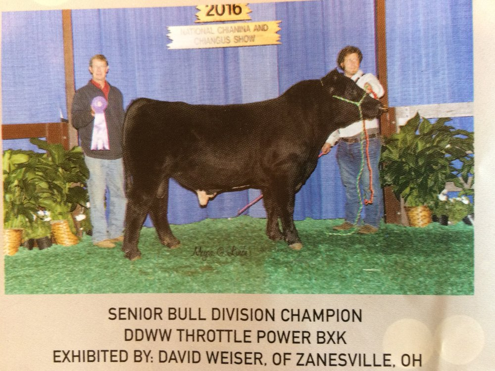 Another Weiser Winner! - Senior Bull Division Champion Exhibited by David Weiser.