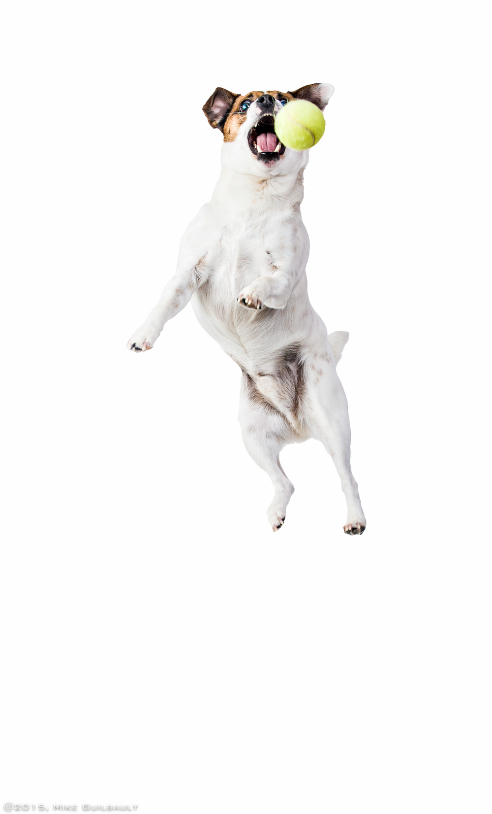 Who Says White Dogs Can't Jump!