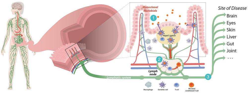 lympatic-system.jpg