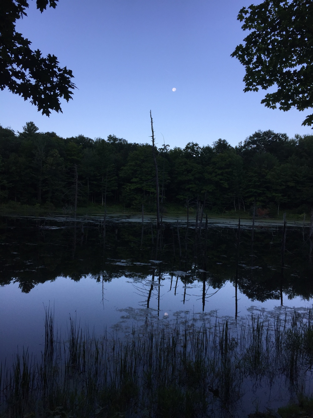 Beaver Pond at the bottom of Ontario County Park (Photo: Chris O'Brien)