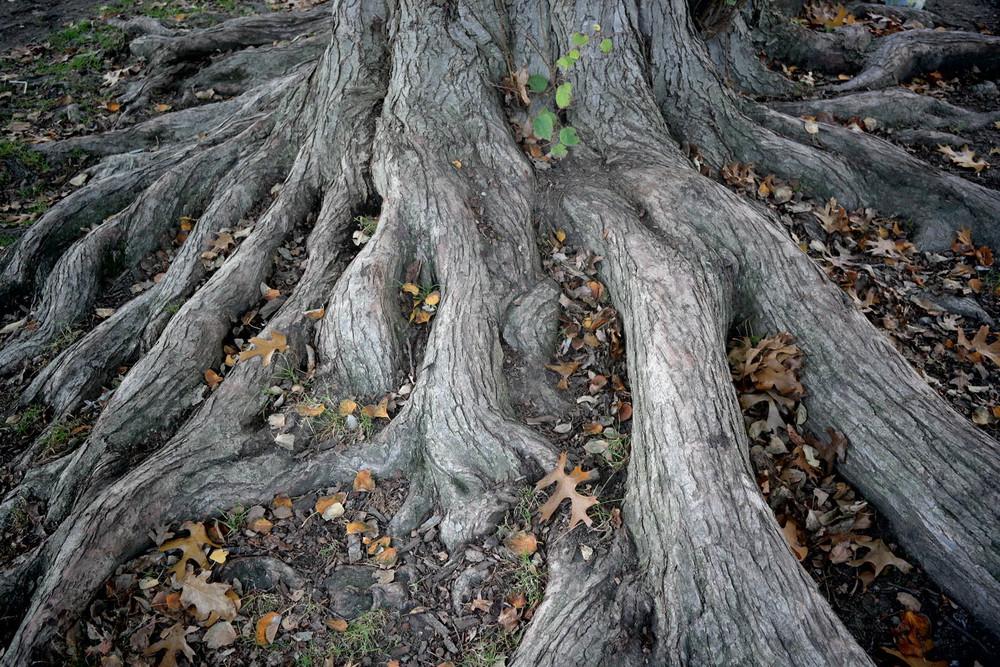 roots-1425.jpg