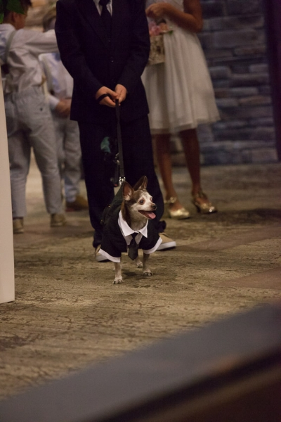 dog-in-wedding-wearing-tuxedo-nashville-jpg
