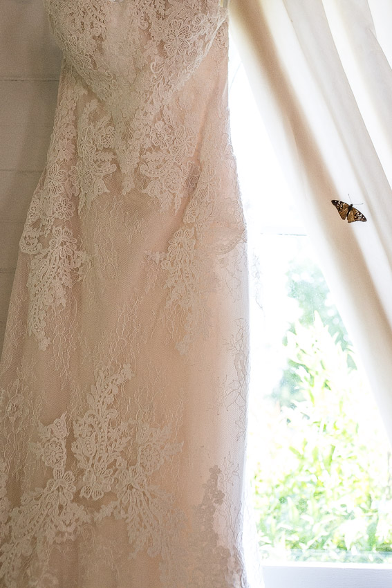 butterfly-on-wedding-day-dress.jpg