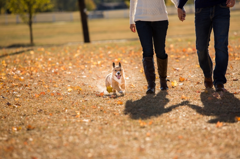 cute-dog-engagement-session-franklin.jpg