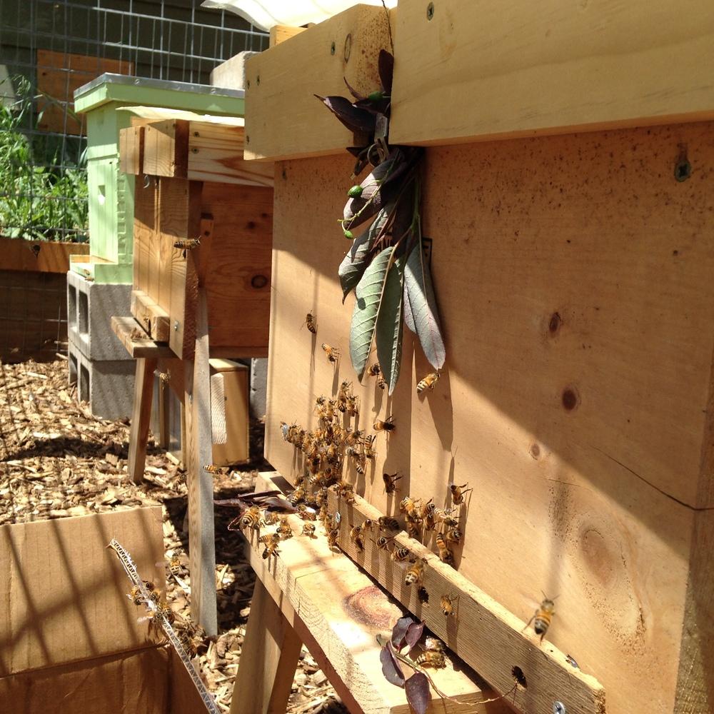 3 Hive Boxes.JPG
