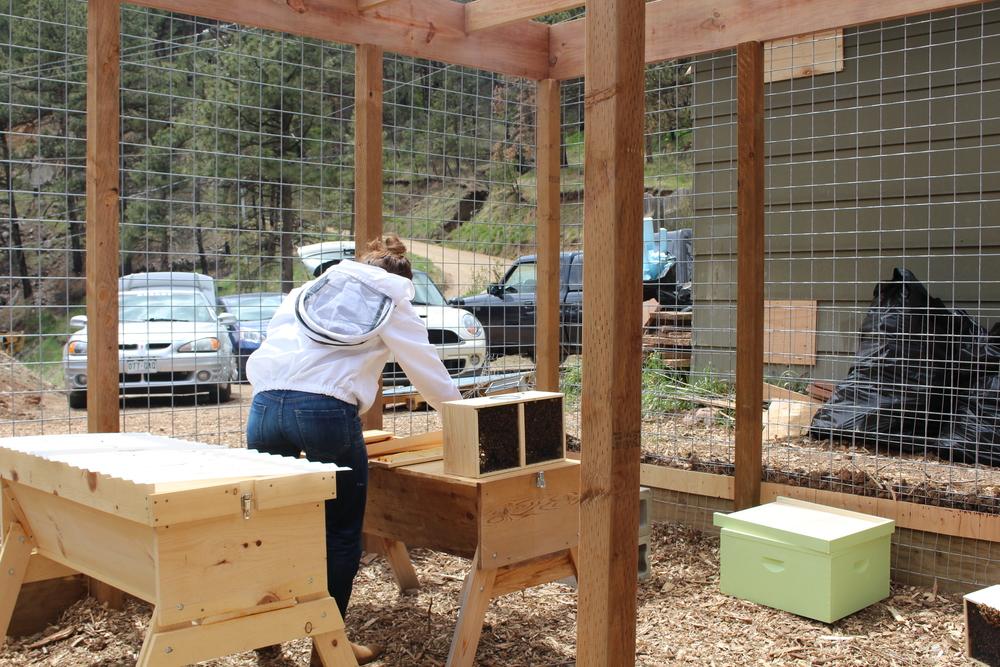 Bee Yard Install.JPG