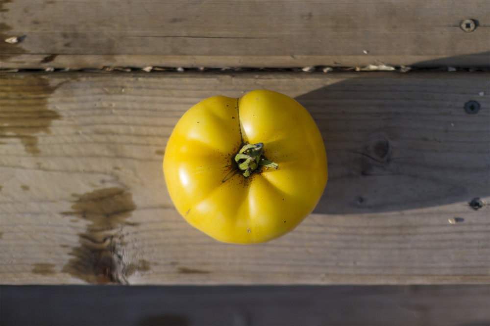 Sean's Yellow Dwarf tomato.  These might be my new favorite variety.