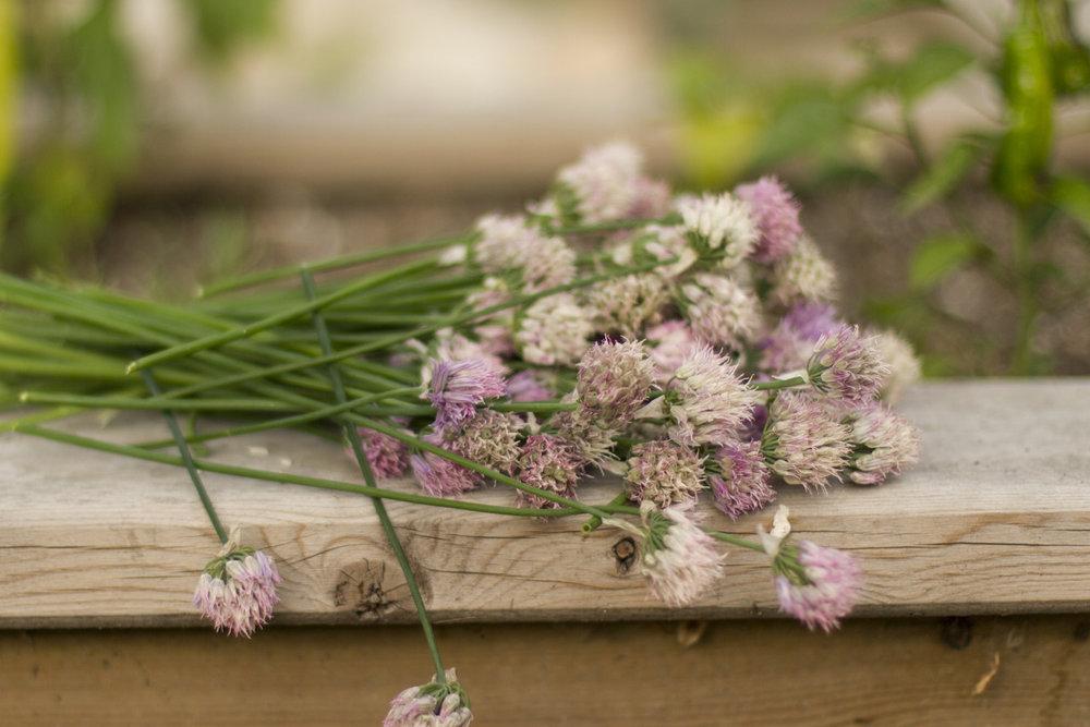 Chive bouquet.