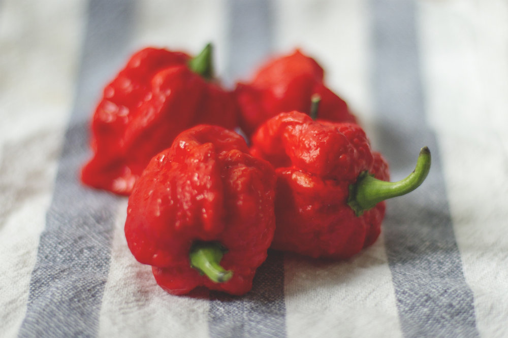 The peppers of my people - Trinidad Moruga Scorpion.