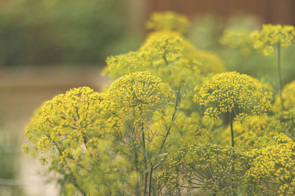 Pollen party.