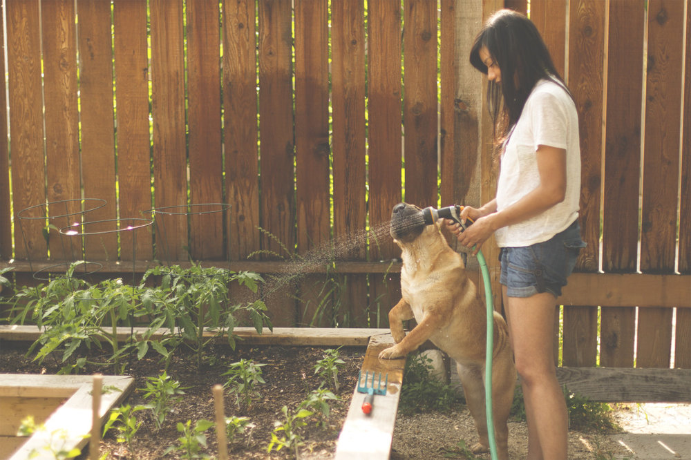 Watering the dog.