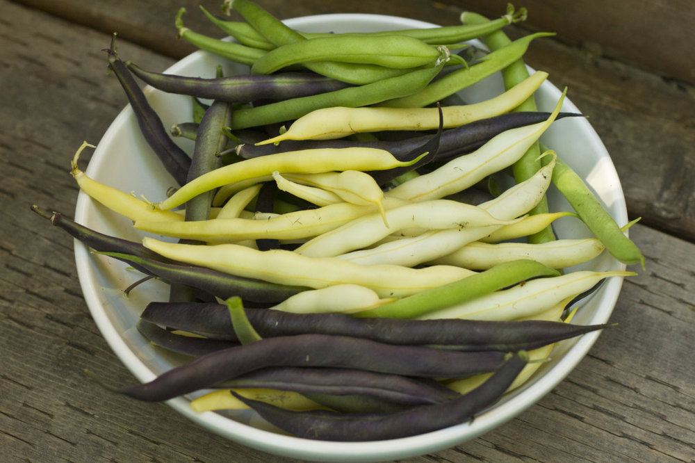 It's been a good summer for bush beans.