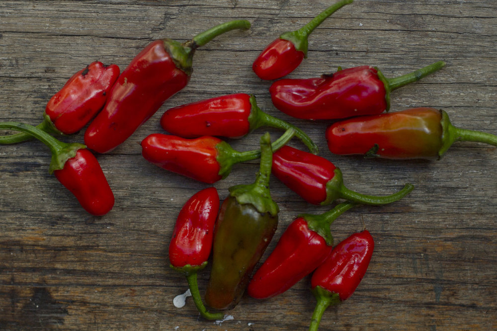 Apache chili peppers!