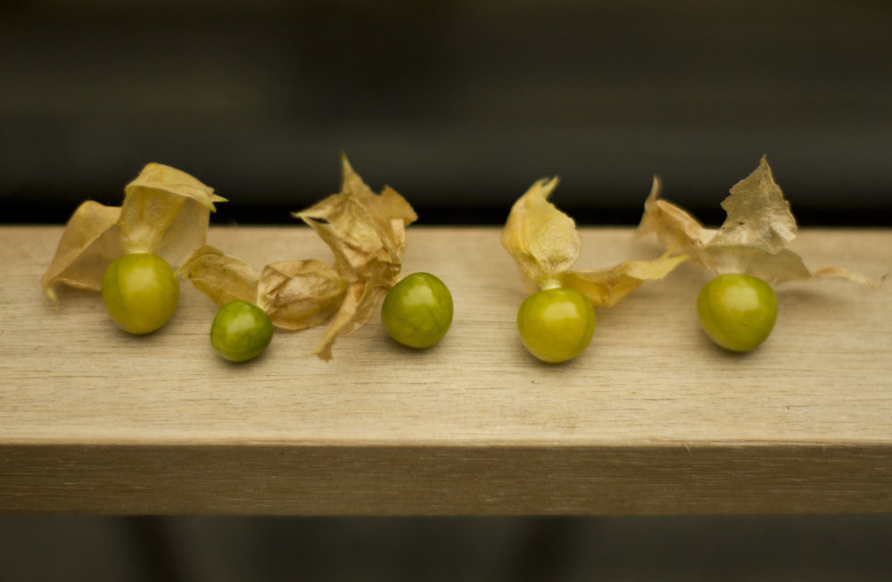 Ground Cherries!    They're a little under ripe, so we'll wait a couple days before enjoying the deliciousness.