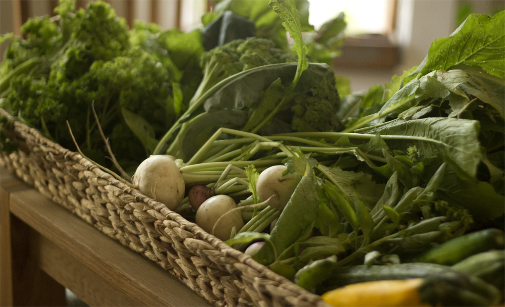 Every Thursday after work we walk down to Evanson st. and pick up our weekly CSA bounty.  This week on the menu we have turnips, broccoli, lettuce, cucumbers, swiss chard, basil, and parsley.