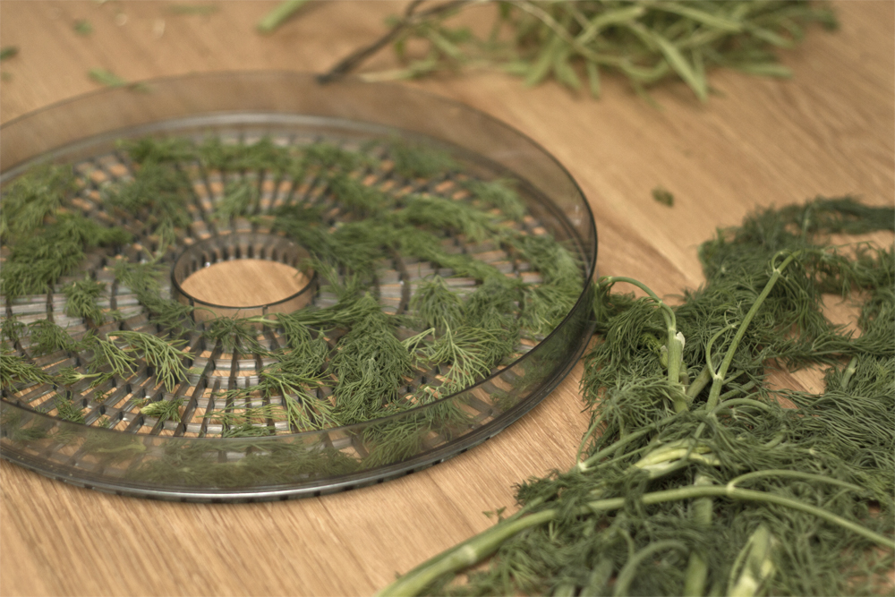 Dehydrating dill is fun and messy.