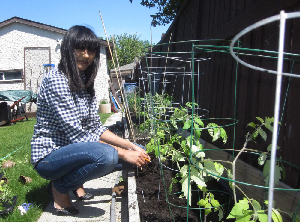 Dad snapped this photo of me with my newly planted tomatoes.   I decided to stick to peppers on the balcony, so the tomatoes went to the space they saved for me in their garden.