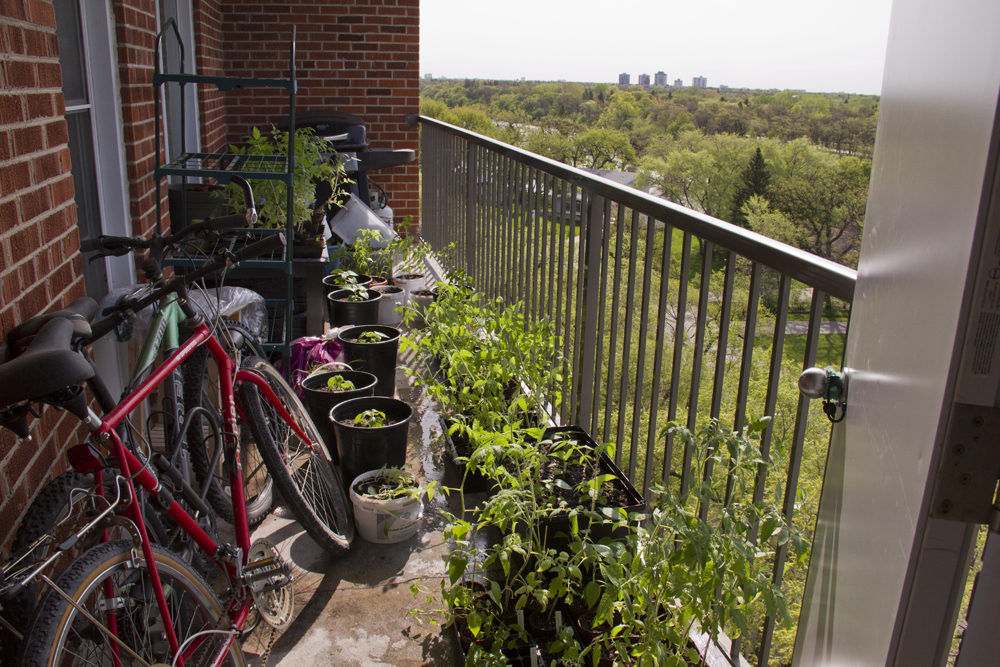 I love our balcony in the summer.  Packed with plants and bikes.  Two more months until we move.  I'm definitely going to miss this.