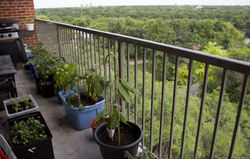 Our balcony…single file only.