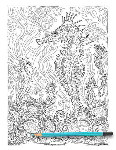 Seahorse FINAL