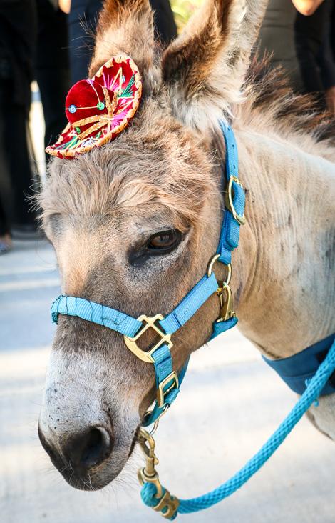 beer burro.jpg
