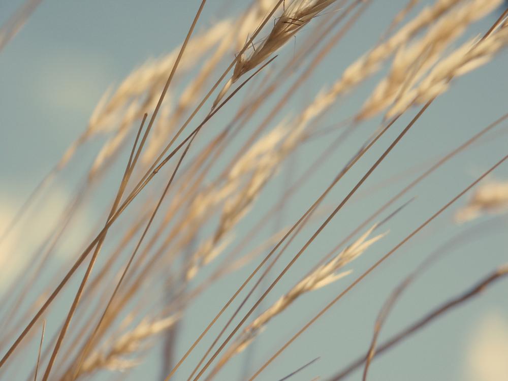 Grasses_landscape_flat_01-edit.jpg