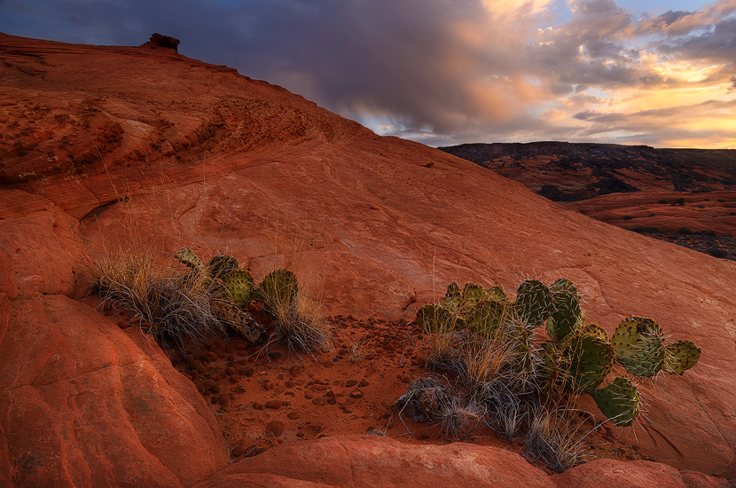 Better Days Ahead - Petrified Sand Dunes, Snow Canyon State Park, UT