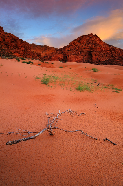 Life and Death - Sand Dunes, Snow Canyon State Park, UT