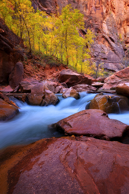 November Run - Virgin River, Zion National Park, UT
