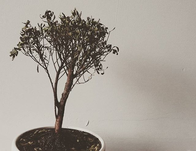 Gilbert the Bonsai, star of our soundtrack 🌟