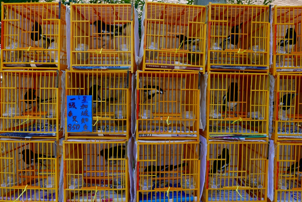 Feathered friends for sale at the Bird Market.