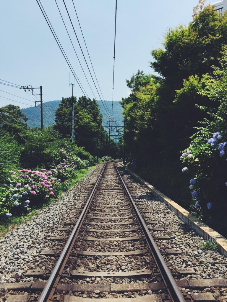 Hydrangeas along the Hakone Tozan Train line.
