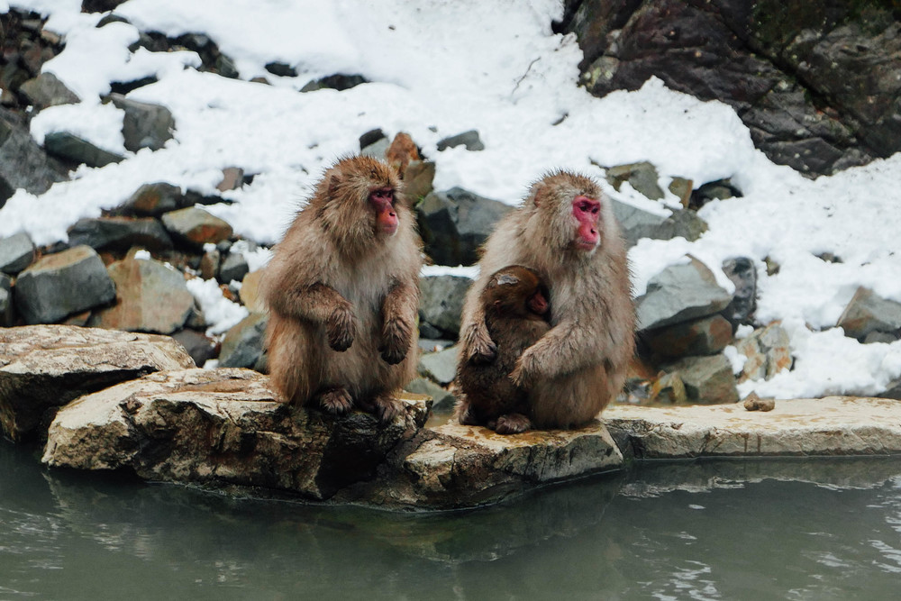 mom-baby-snow-monkey.jpg