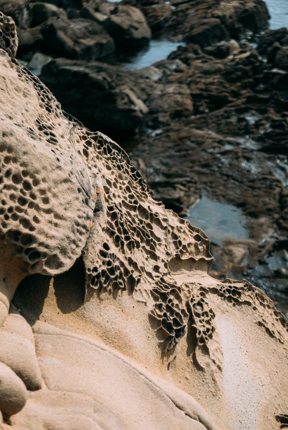 Salt Point State Park-23.jpg