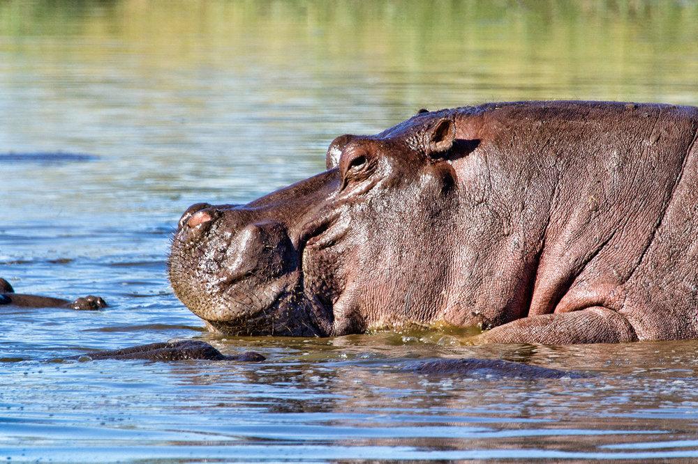 Mr Hippo!.jpg