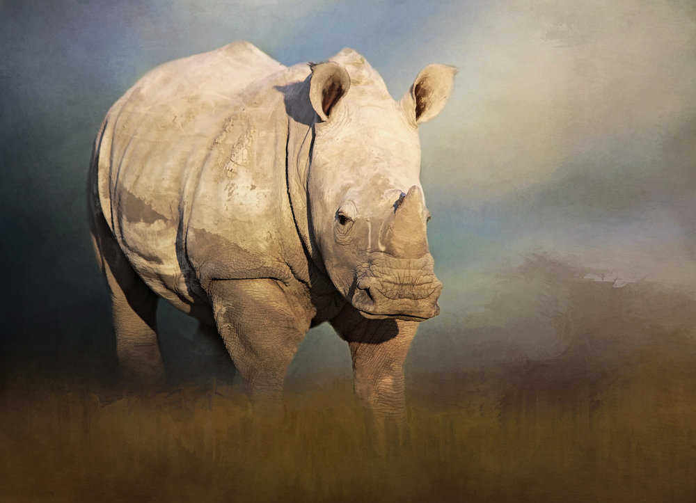 YOUNG WHITE RHINO.