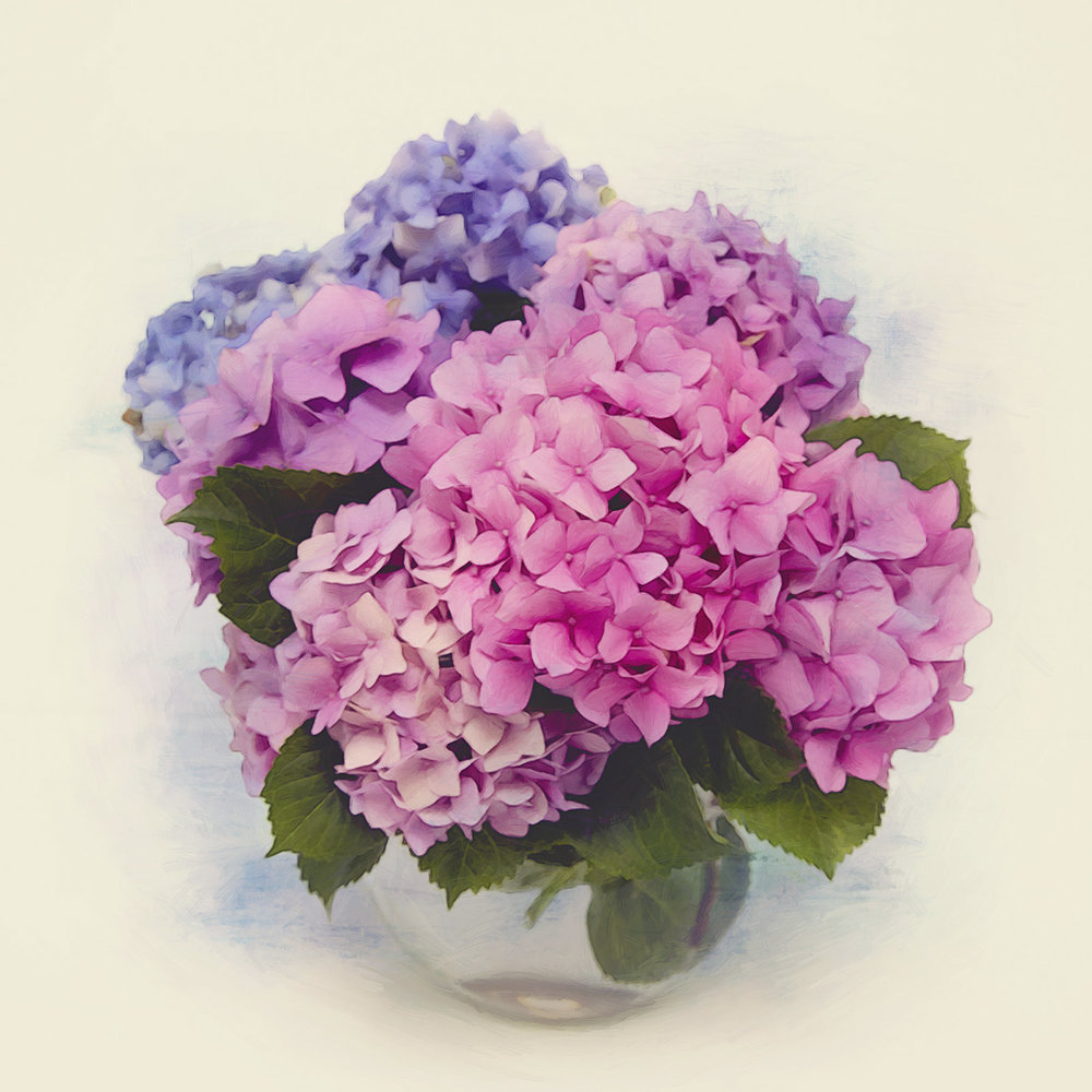 Bunch of hydrangea.
