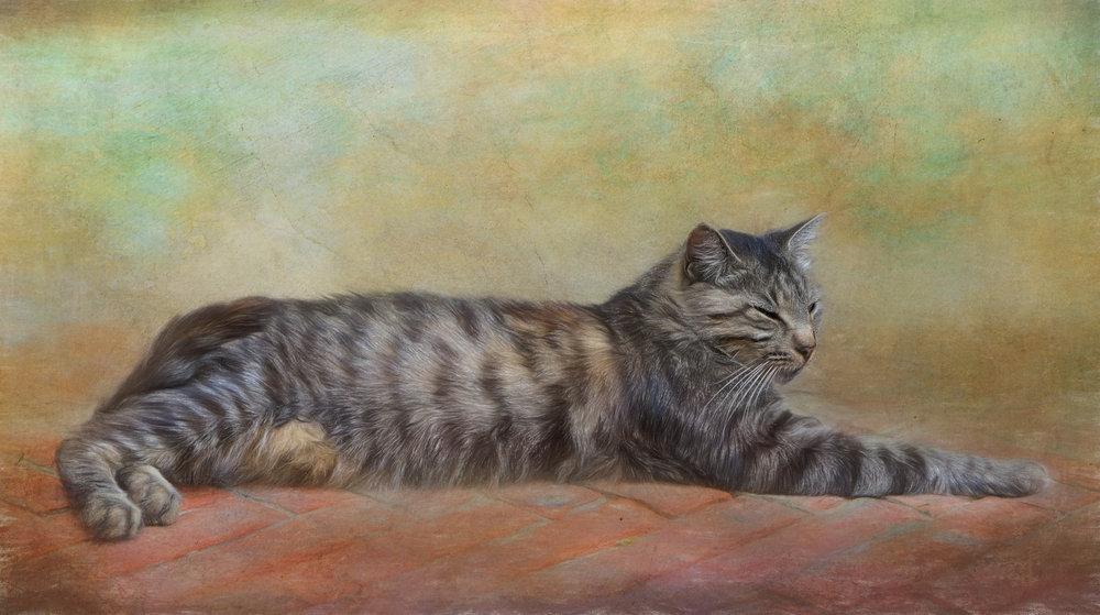 Italian cat.