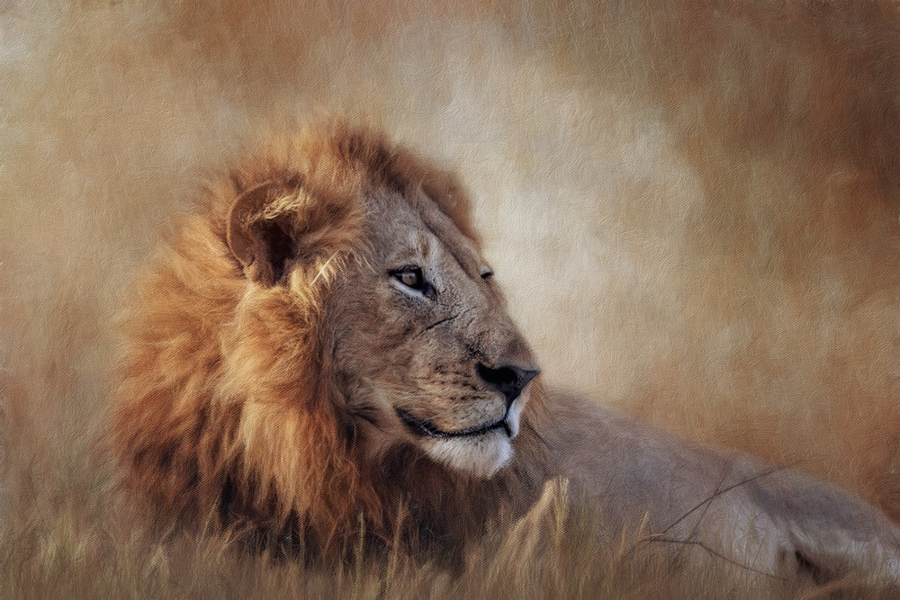 The lion denotes power, aggression and might.