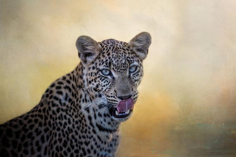 Leopard...I've got you in my sights!