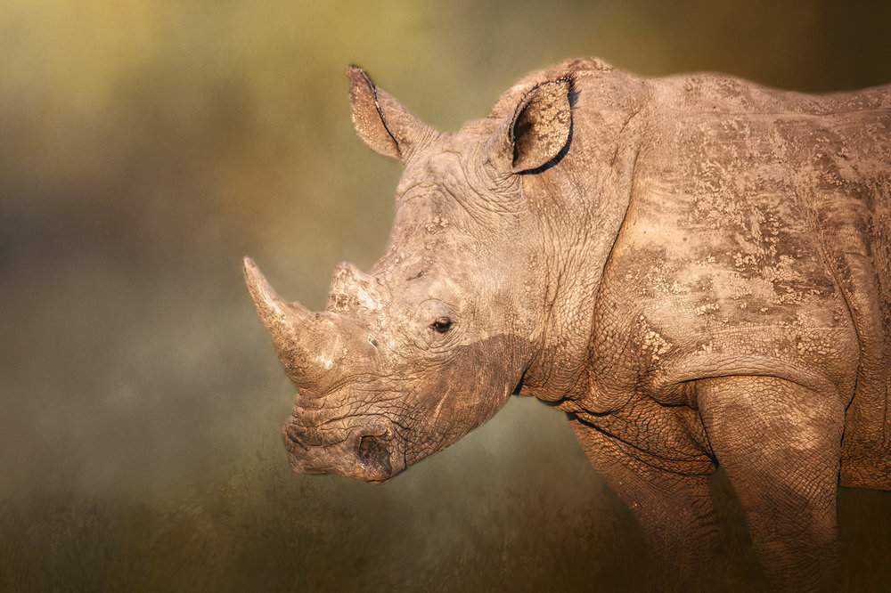 Ever alert and watchful Rhino.